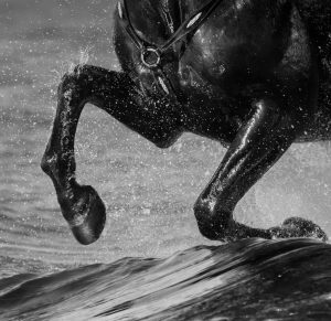 Horse run gallop on water. Legs of horse close up with splashes.