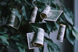 money growing on a tree concept, endless reserve